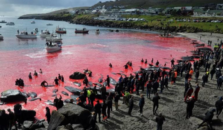 Matanza de 1,500 delfines causa indignación mundial